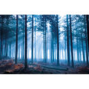 Tom Mackie Forest - Maxi Poster - 61 x 91.5cm