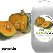Touch of Ginger Weird Seedpod Pumpkin