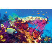 Fish and Coral - Maxi Poster - 61 x 91.5cm