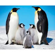 Penguins Family - Mini Poster - 40 x 50cm