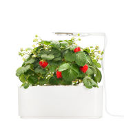 Click & Grow Starter Kit with Strawberry
