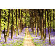 Woodland Path - Maxi Poster - 61 x 91.5cm