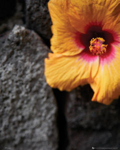 Flowers Stone Wall - Mini Poster - 40 x 50cm