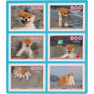Boo the World's Cutest Dog Magnets
