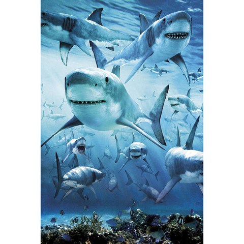 Shark Infested - Maxi Poster - 61 x 91.5cm