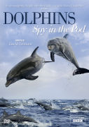 Dolphins Spy in Pod