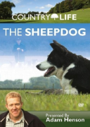 Country Life: The Sheepdog