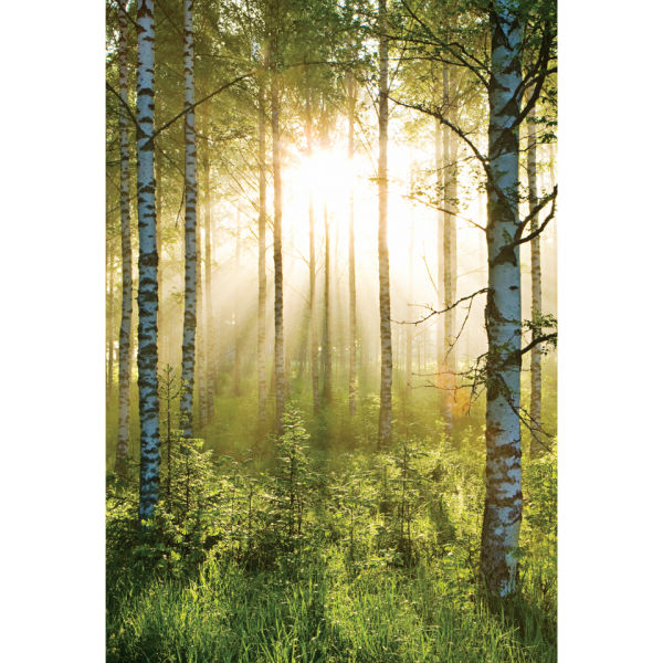 Forest Scene Deco Wall Mural: Image 2 Part 54