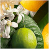 Molton Brown Orange & Bergamot Body Wash: Image 6