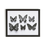 Art For The Home Botanical Butterflies Framed Print Wall Art