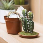 Cactus Pot Safe