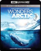 IMAX: Wonders Of The Arctic - 4K Ultra HD