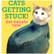Cats Getting Stuck (Hardback)