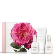 Jurlique Rose Moisture Plus Essentials (Worth £68.00)