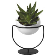 Umbra Nesta Table Top and Hanging Planter
