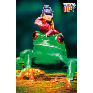 5 Frogs Colours - Maxi Poster - 61 x 91.5cm