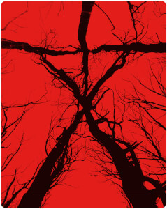 Blair Witch - Steelbook d'édition limitée exclusive Zavvi