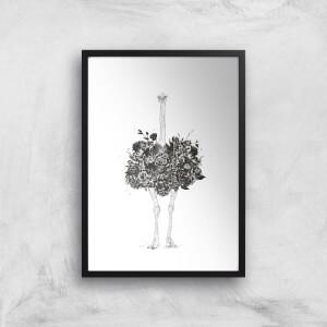 Balazs Solti Ostrich Art Print