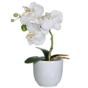 Phalaenopsis Pot - Tusca White
