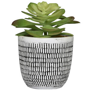 Candlelight Succulent in Ceramic Pot with Dashes - Black/White