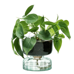 LSA International Canopy Clear Self Watering Planter - 13cm