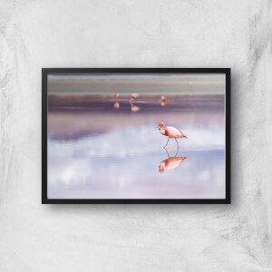 Solitary Flamingo Giclee Art Print