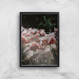 A Pat Of Flamingos Giclee Art Print