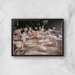 A Resting Pat Of Flamingos Giclee Art Print