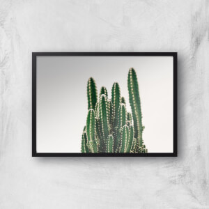 A Huddle of Cactuses Giclee Art Print