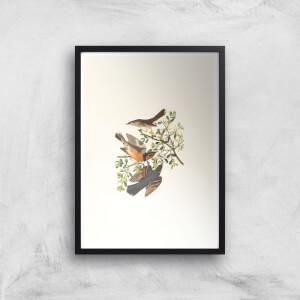 A Trio Of Birds Giclee Art Print