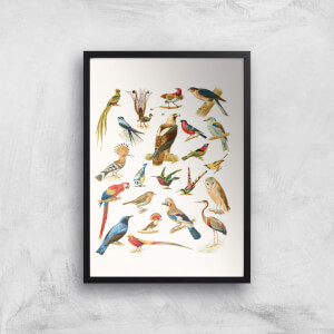 Researching Birds Giclee Art Print
