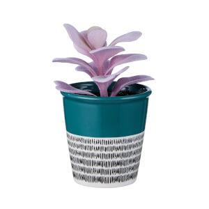 Small Plant in Dalmatian & Teal Pot