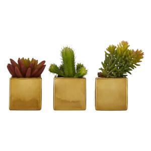 Naomi Mini Succulents in Gold Pots - Set of 3