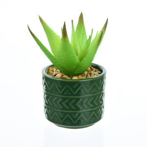 Succulent in Teal Pot