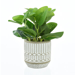 Leafy Plant in Cement Pot - Large