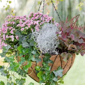 Autumn Hanging Basket Mixed 30cm