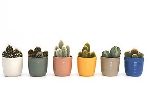 Cactus In Cella Pot 13cm