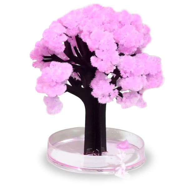 Cerisier Sakura Magique