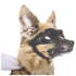 Ride With Car Stickers - Dog: Image 2