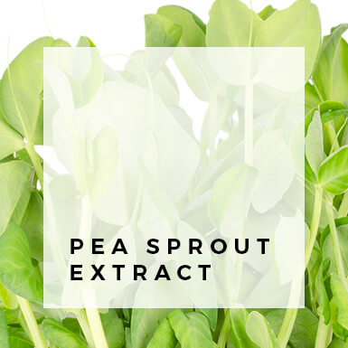 Pea Sprout Extract
