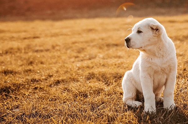 A Guide to Weaning Puppies