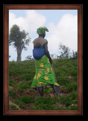 Organic geranium oil ORIGIN: DEMOCRATIC REPUBLIC OF THE CONGO