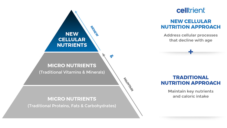 Pyramid of Cellular Nutrients