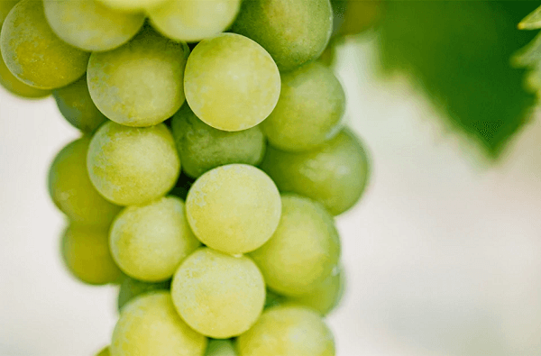 Vinanza <sup>®</sup> Grape