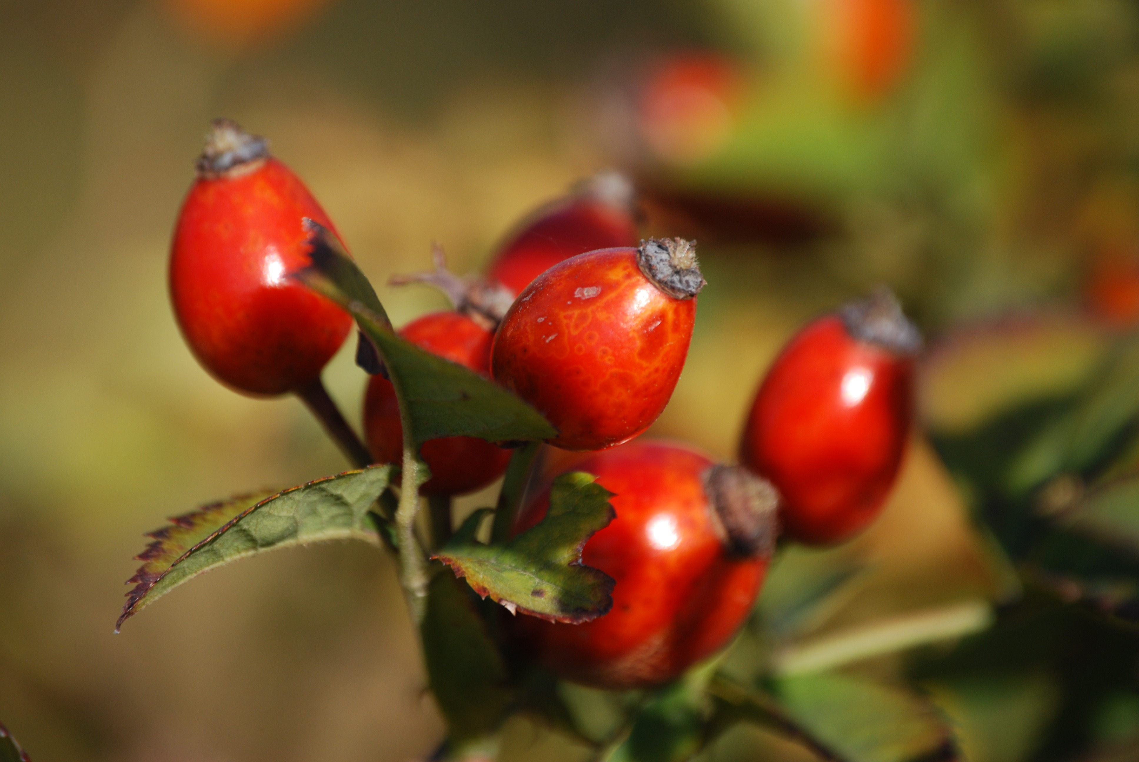 Picture of berries