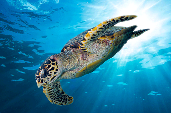 Turtle in the sea banner image