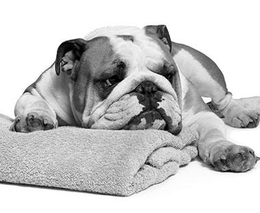Bulldog - Skincare for men